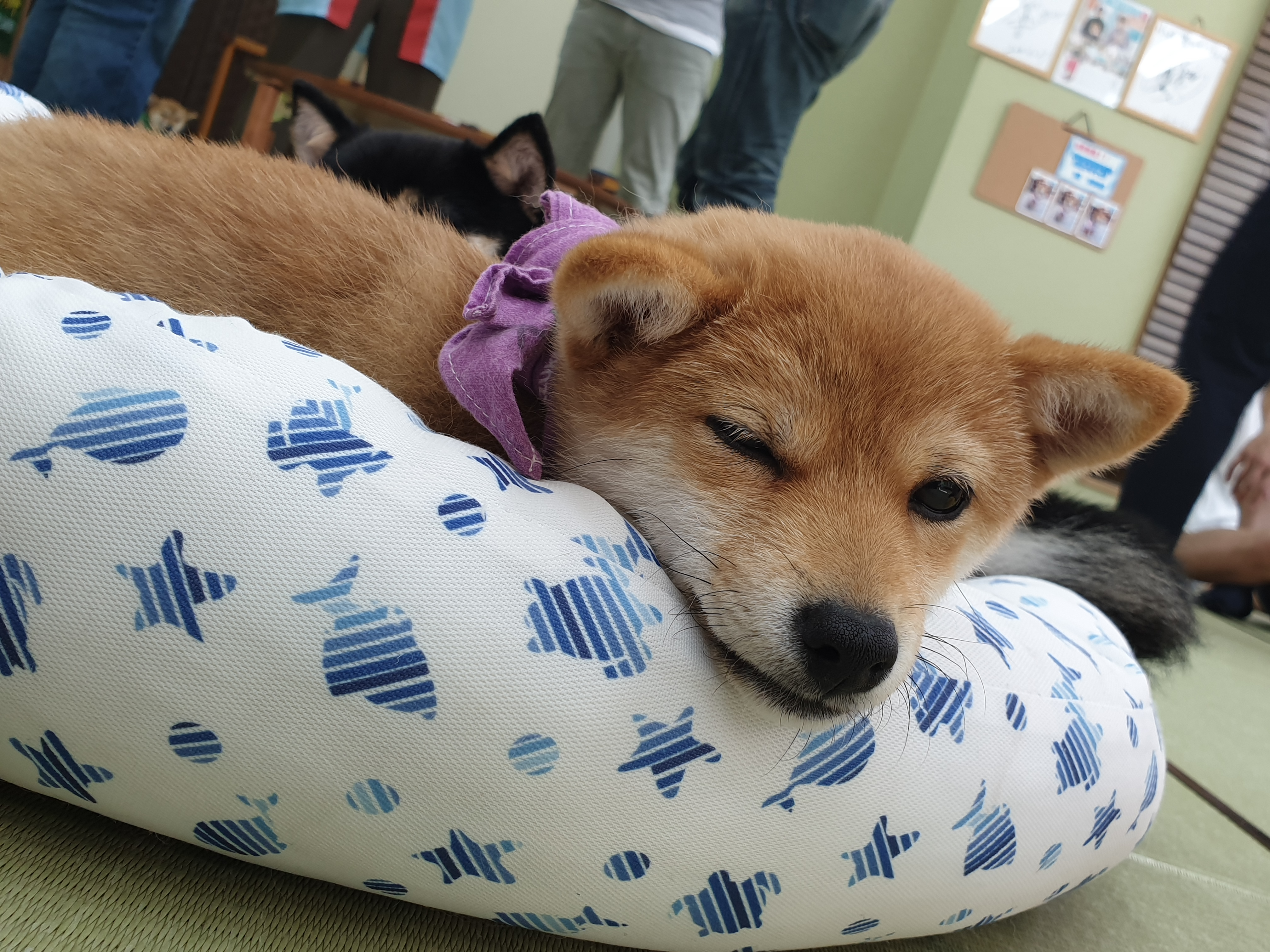 Geek It! Otaku Out and About: Shiba Cafe in Japan